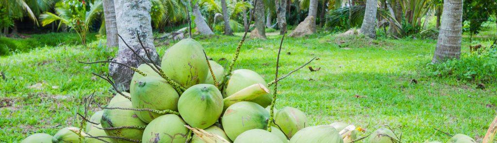 bannercoconut4
